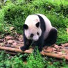 PANDA EXPERIENCE